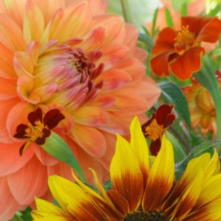 Pluktuin-Bloemrijk-biologische-bloemen-fotograaf-Jeroen-ten-Caat-850x500-nog toestemming vragen